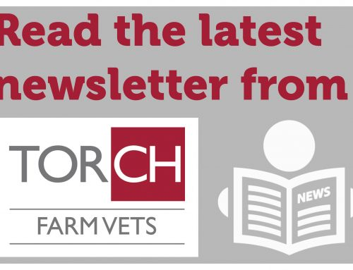 Torch Farm Vets newsletter – October 2019