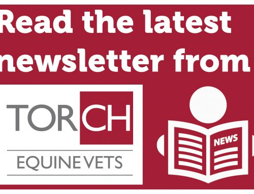 Torch Equine Vets Newsletter – October 2019